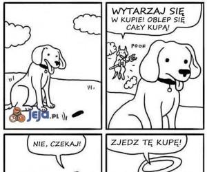Właściciele psów potwierdzą