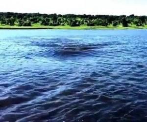 Nie wiedziałem, że hipcie tak szybko pływają!