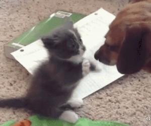 Nie dotykam cię, wcale cię nie dotykam!