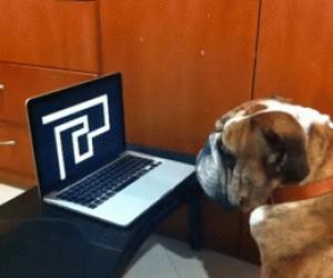 Pies o stalowych nerwach