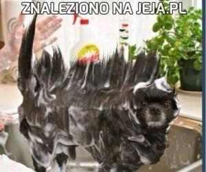 Czy to Salvadore Dali? Nie, to pies!