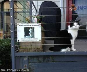 Czy widziałeś tego kota?