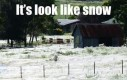 Łąka pokryta białym puchem