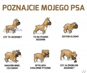 Poznajcie mojego psa