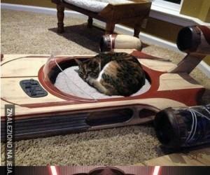 Dla kocich fanów Gwiezdnych Wojen