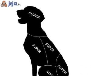 Gdzie można głaskać psa i kota