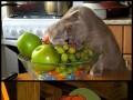 To mój kociak!