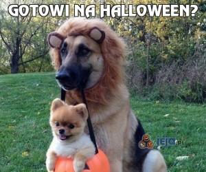 Gotowi na halloween?