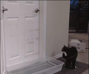 Jak oduczyć kota otwierania drzwi? Może woda pod drzwiami? Nope...