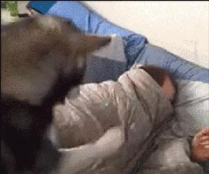 Wstawaj! Pobudka! Wstawaj! Wstawaj! Wstawaj!