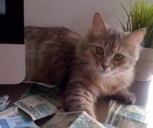 Bogaty kot