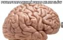 Mózgi takie są