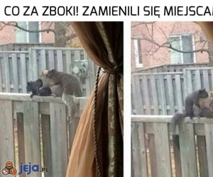Wiewiórki, co wy robicie?!