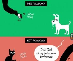 Efekt Pawłowa
