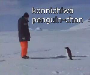 Śmiertelny mistrz pingwin