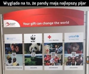 Afryka może poczekać, ratujmy pandy!