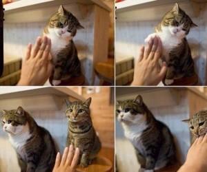Są dwa rodzaje kotów...