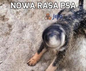Nowa rasa psa