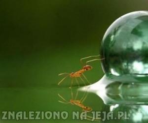 Mrówka vs kropla wody