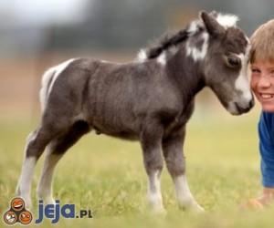 Najmniejszy koń świata