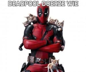 Deadpool dobrze wie
