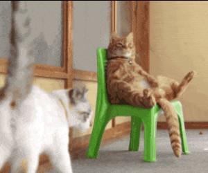 P*eprzyć bycie kotem. Mam wakacje