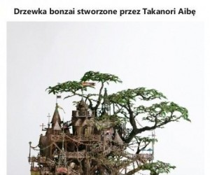 Niesamowite drzewka bonzai