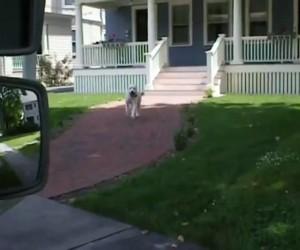 Pies odbiera pocztę