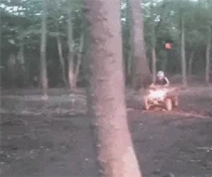 Nie tak się ścina drzewa...