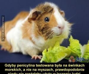 Penicylina