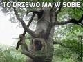 To drzewo ma w sobie