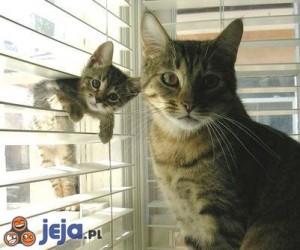 Kotek zza żaluzji