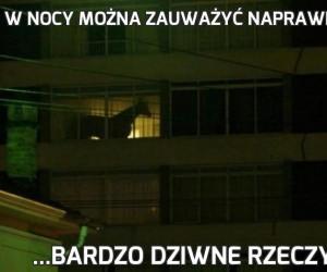 W nocy można zauważyć naprawdę...