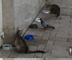 Gołąb w złej dzielnicy