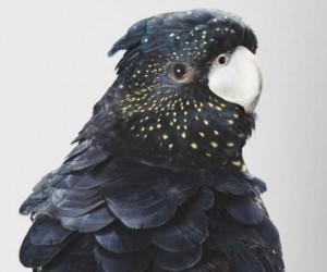 Czarne zwierzaki są fantastyczne