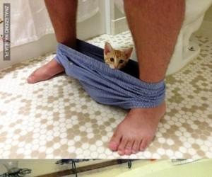 Zwierzątka łazienkowe