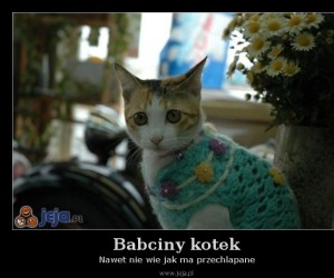 Babciny kotek