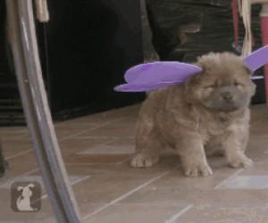 Hej maleńka, widziałaś kiedyś takie skrzydła?