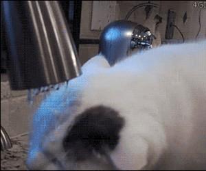 Kot, który potrafi się myć