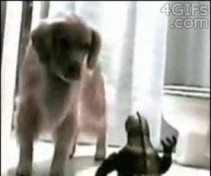 Jak zmusić psa do kąpieli