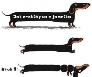 Jak zrobić psa z jamnika