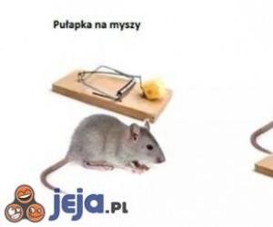 Mysz i pułapka