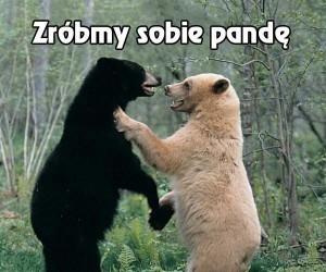 Jak powstaje panda