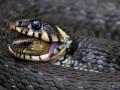 Wężocepcja