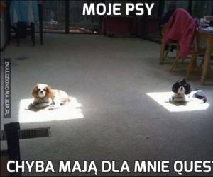 Moje psy