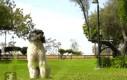 Pies i salto w tył