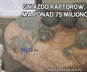 Gniazdo raptorów, które ma ponad 75 milionów lat