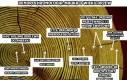 Dendrochronologia: nauka o wieku drzew