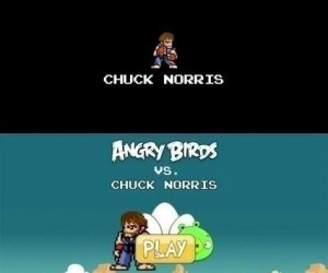 Chuck Norris gra w Angry Birds