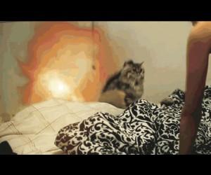 Koteł w filmie akcji